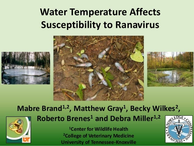 Water Temperature Affects Susceptibility to Ranavirus Mabre Brand1,2, Matthew Gray1, Becky Wilkes2, Roberto Brenes1 and De...
