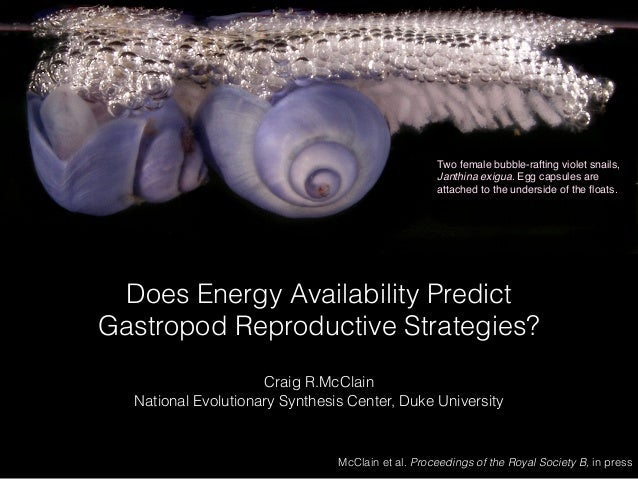 Does Energy Availability Predict Gastropod Reproductive Strategies? Craig R.McClain National Evolutionary Synthesis Center...