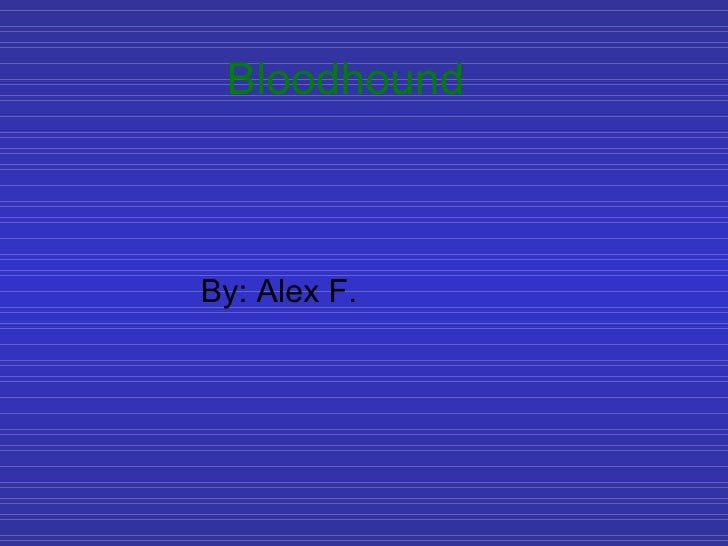 Bloodhound By: Alex F.