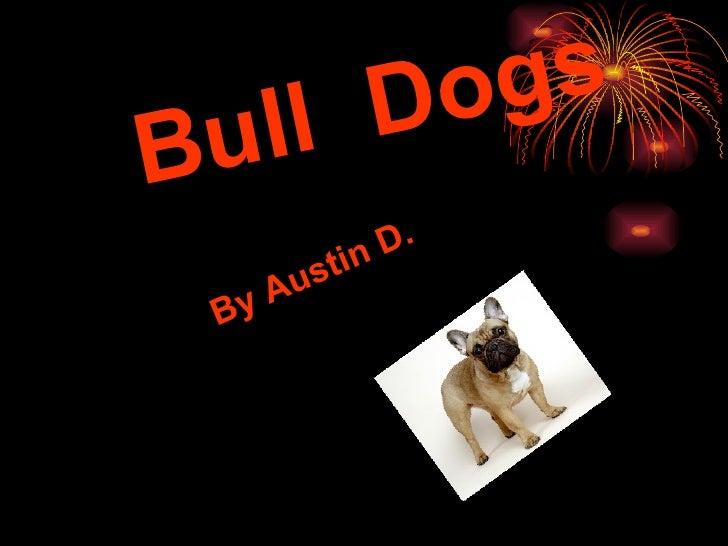 Bull  Dogs By Austin D.