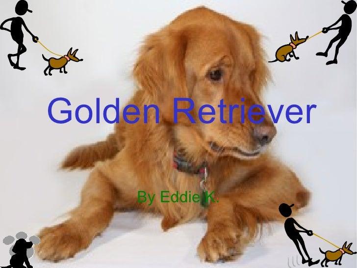 Golden Retriever By Eddie K.