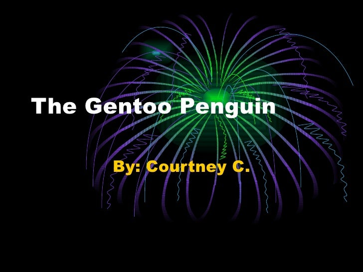 The Gentoo Penguin By: Courtney C.