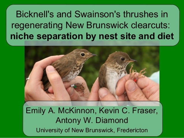 1 Bicknell's and Swainson's thrushes in regenerating New Brunswick clearcuts: niche separation by nest site and diet Emily...