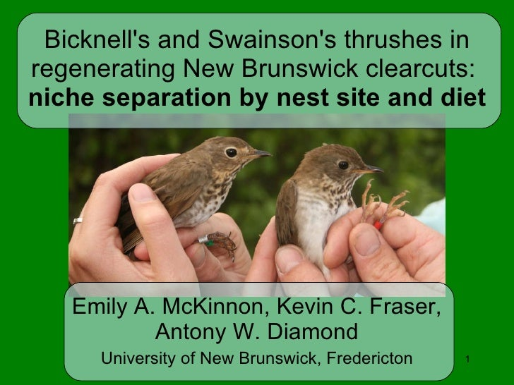 Bicknell's and Swainson's thrushes in regenerating New Brunswick clearcuts:  niche separation by nest site and diet Emily ...