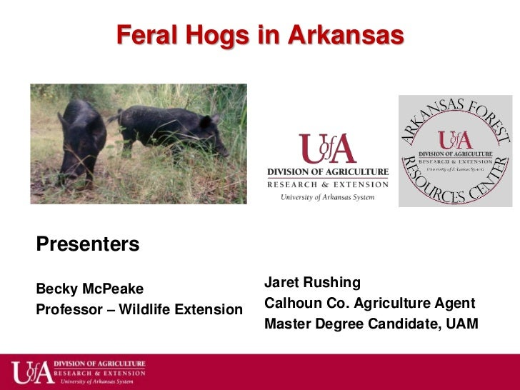 Feral Hogs in ArkansasPresentersBecky McPeake                    Jaret RushingProfessor – Wildlife Extension   Calhoun Co....