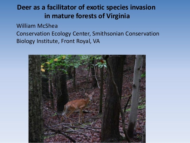 Deer as a facilitator of exotic species invasion         in mature forests of VirginiaWilliam McSheaConservation Ecology C...