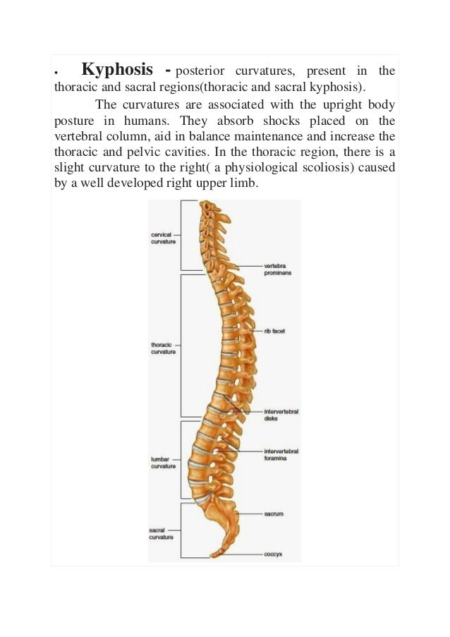 Osteology Of The Vertebrae
