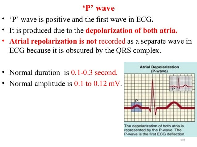 'P' wave • 'P' wave is positive and the first wave in ECG. • It is produced due to the depolarization of both atria. • Atr...