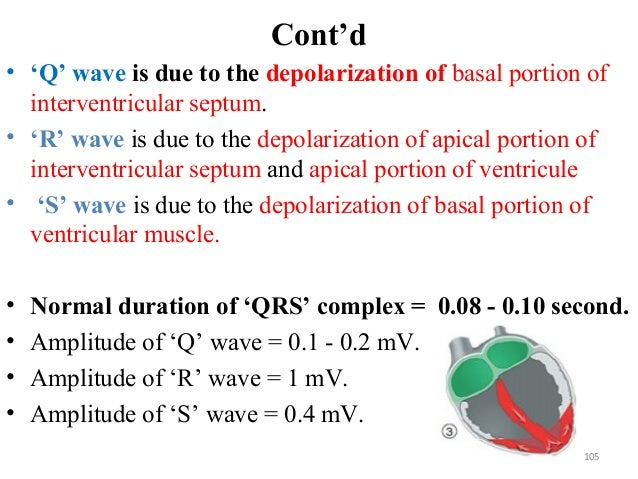 Cont'd • 'Q' wave is due to the depolarization of basal portion of interventricular septum. • 'R' wave is due to the depol...