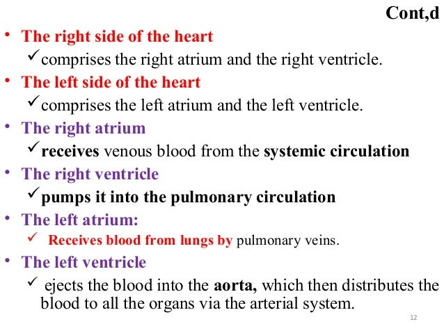 Cont,d • The right side of the heart comprises the right atrium and the right ventricle. • The left side of the heart co...