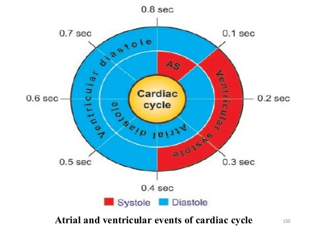 150Atrial and ventricular events of cardiac cycle