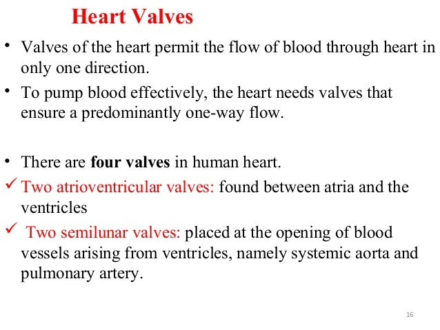 Heart Valves • Valves of the heart permit the flow of blood through heart in only one direction. • To pump blood effective...