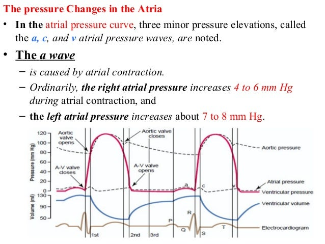 The pressure Changes in the Atria • In the atrial pressure curve, three minor pressure elevations, called the a, c, and v ...