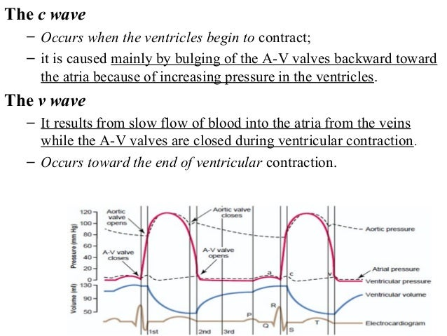 The c wave – Occurs when the ventricles begin to contract; – it is caused mainly by bulging of the A-V valves backward tow...