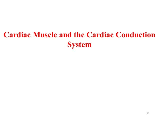 Cardiac Muscle and the Cardiac Conduction System 22