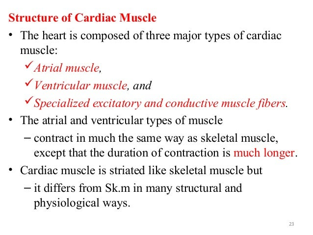 Structure of Cardiac Muscle • The heart is composed of three major types of cardiac muscle: Atrial muscle, Ventricular m...
