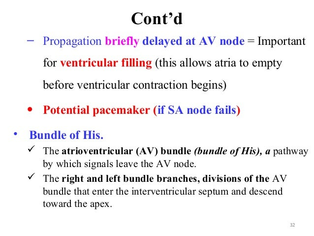 Cont'd – Propagation briefly delayed at AV node = Important for ventricular filling (this allows atria to empty before ven...