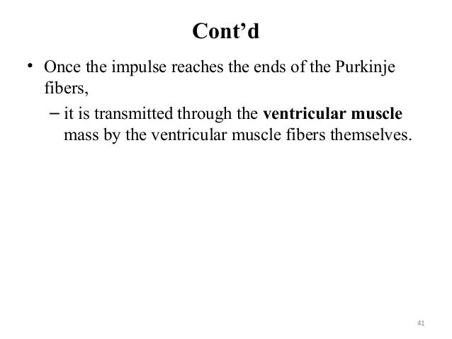 Cont'd • Once the impulse reaches the ends of the Purkinje fibers, – it is transmitted through the ventricular muscle mass...