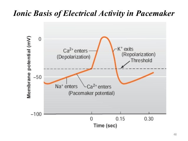 Ionic Basis of Electrical Activity in Pacemaker 48