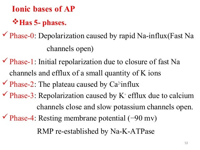 Ionic bases of AP Has 5- phases. Phase-0: Depolarization caused by rapid Na-influx(Fast Na channels open) Phase-1: Init...