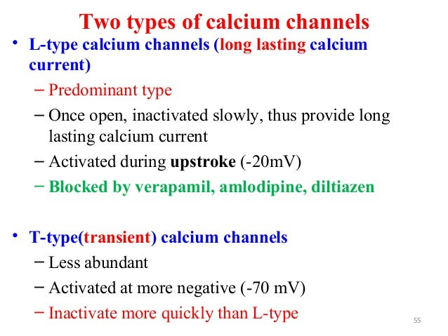 Two types of calcium channels • L-type calcium channels (long lasting calcium current) – Predominant type – Once open, ina...