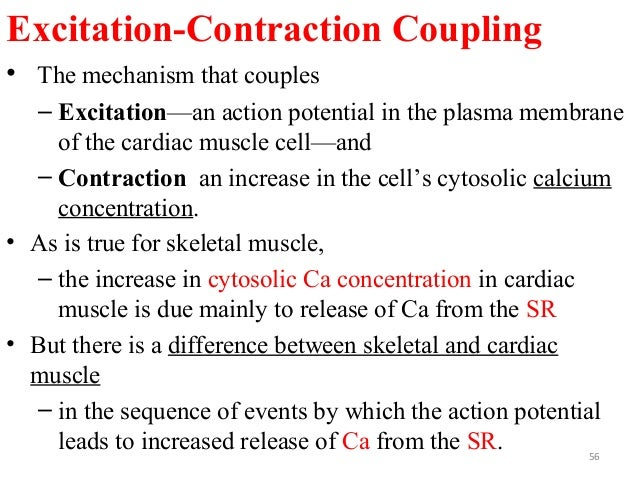 Excitation-Contraction Coupling • The mechanism that couples – Excitation—an action potential in the plasma membrane of th...