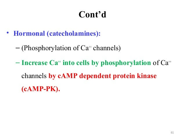 Cont'd • Hormonal (catecholamines): – (Phosphorylation of Ca++ channels) – Increase Ca++ into cells by phosphorylation of ...
