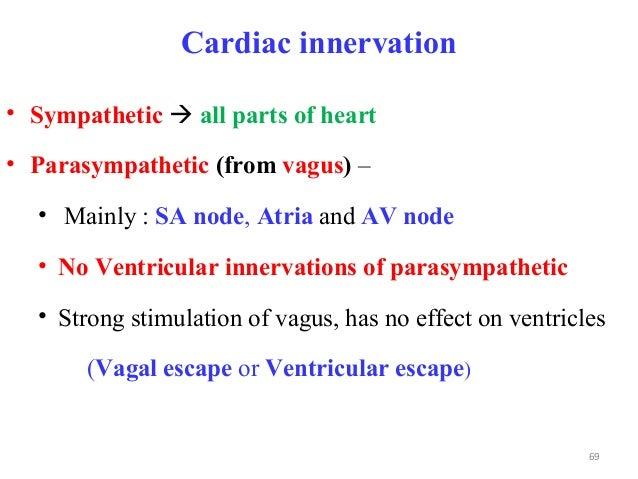 Cardiac innervation • Sympathetic  all parts of heart • Parasympathetic (from vagus) – • Mainly : SA node, Atria and AV n...
