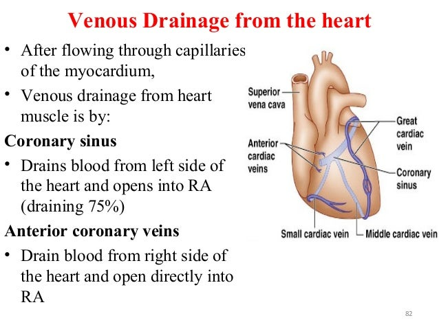 Venous Drainage from the heart • After flowing through capillaries of the myocardium, • Venous drainage from heart muscle ...