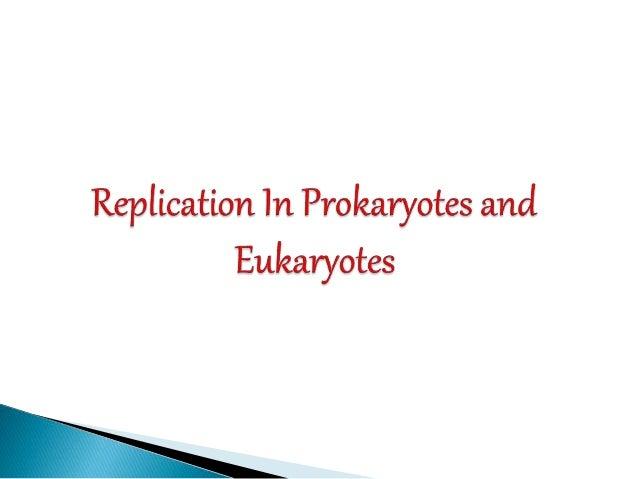 Replication In Eukaryotes And Prokaryotes