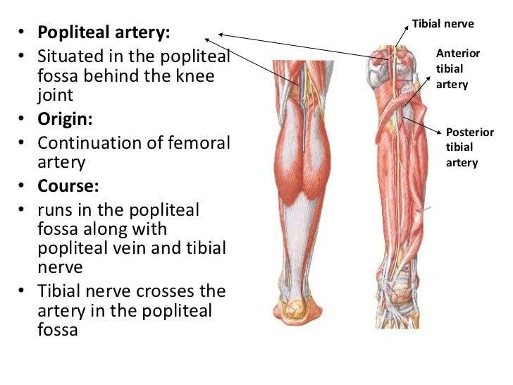 Medial Circumflex Femoral Artery Mdsc 1102 pbl 3