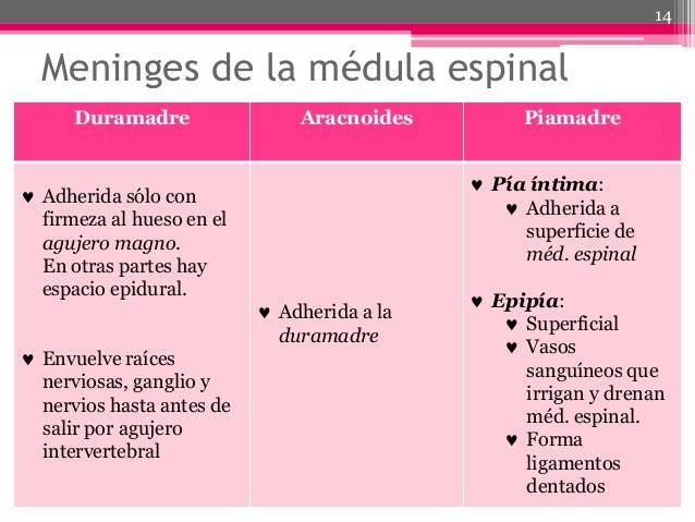 Diferencia entre epidural y raquidea yahoo dating 7