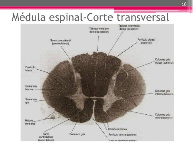 subdural-hematoma