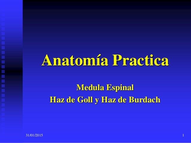 Médula espinal cordón posterior