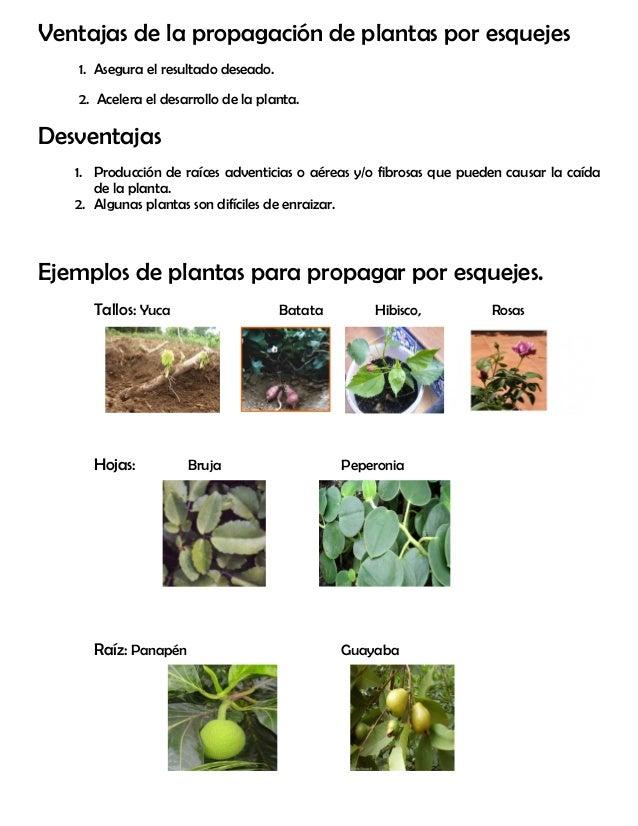 M dulo 18 esquejes for Planta ornamental que se reproduzca por esquejes