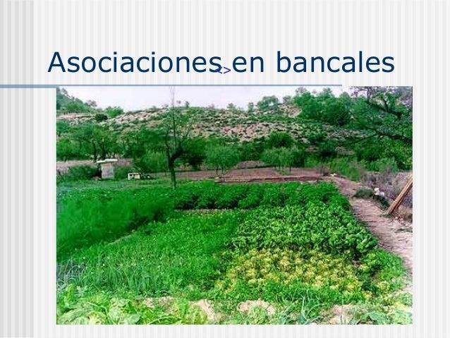 control de malas hierbas en agricultura ecol gica