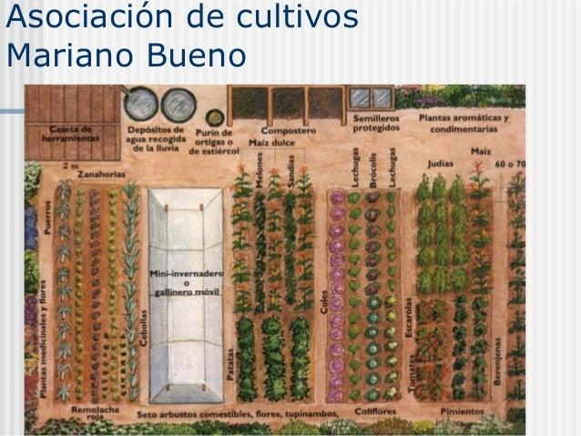 Control de malas hierbas en agricultura ecol gica for Asociacion de cultivos tomate