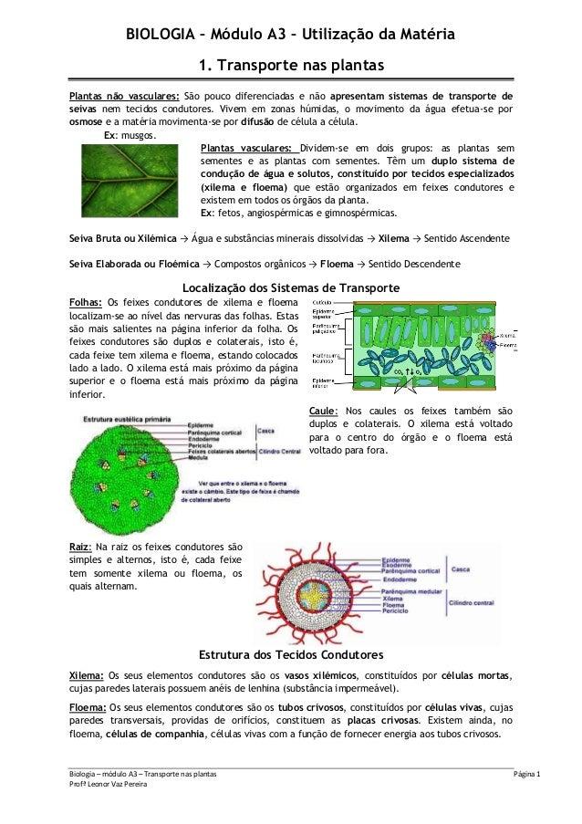 Biologia – módulo A3 – Transporte nas plantas Página 1Profª Leonor Vaz PereiraBIOLOGIA – Módulo A3 – Utilização da Matéria...
