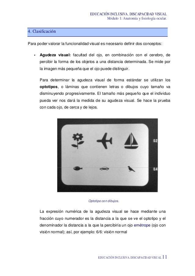 Atractivo Anatomía Visual Y La Fisiología Banco De Pruebas Adorno ...