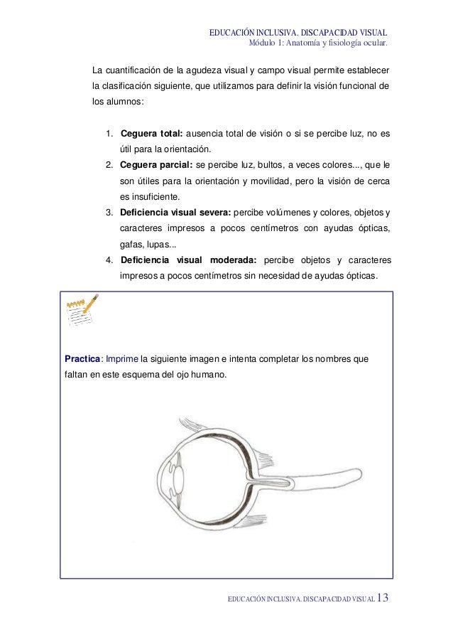 Lujoso La Anatomía Y La Fisiología Visual 3ª Edición Friso ...