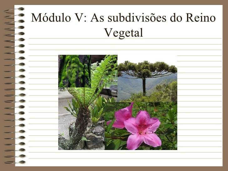 Módulo V: As subdivisões do Reino            Vegetal
