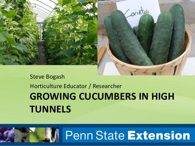 GROWING CUCUMBERS IN HIGH TUNNELS Steve Bogash Horticulture Educator / Researcher