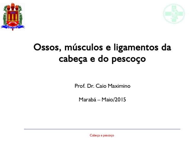 Cabeça e pescoço Ossos, músculos e ligamentos da cabeça e do pescoço Prof. Dr. Caio Maximino Marabá – Maio/2015