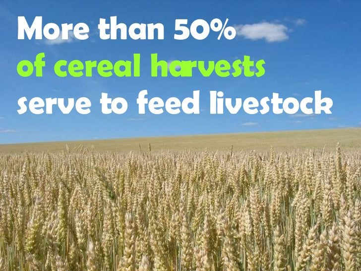 More than 50%   of cereal harvests  serve to feed livestock