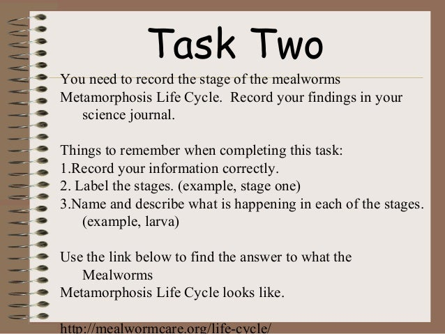 Mealworm WebQuest