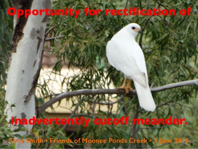 Opportunity for rectification of inadvertently cutoff meander. Tony Smith • Friends of Moonee Ponds Creek • 3 June 2016