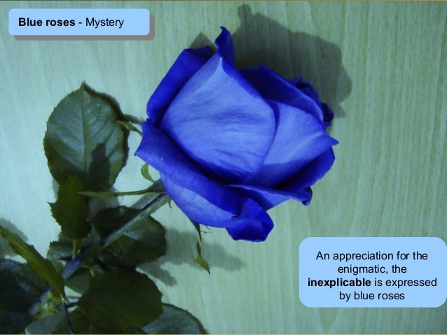 Meaning of the colors of roses for Do black roses really exist
