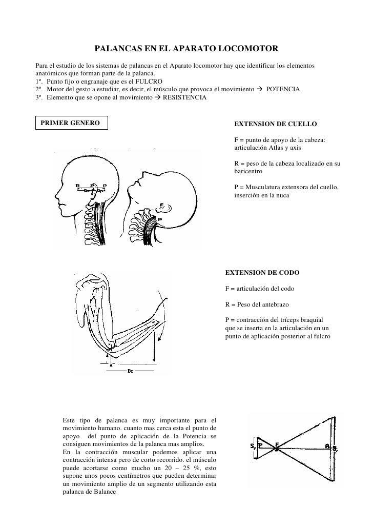 Mecanica. el cuerpo humano como sistema de palancas