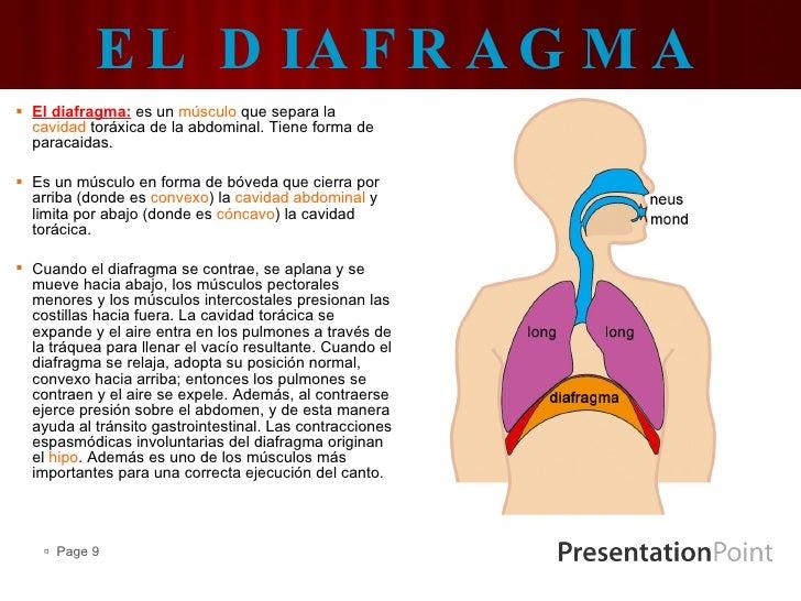 Increíble La Función Del Diafragma Modelo - Anatomía de Las ...