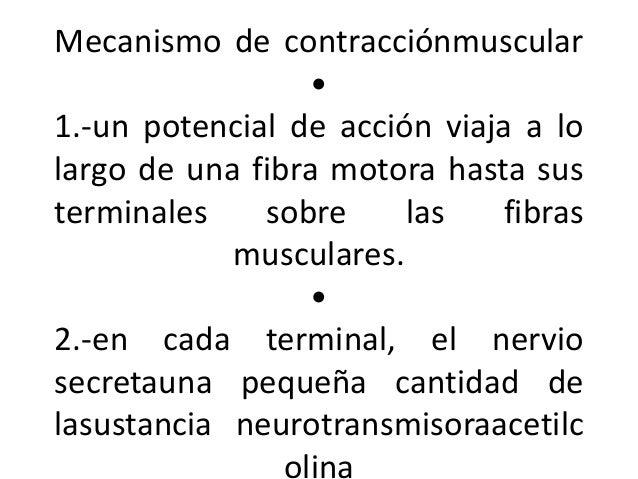 Mecanismo de contracciónmuscular • 1.-un potencial de acción viaja a lo largo de una fibra motora hasta sus terminales sob...